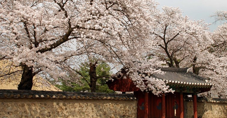 Korea - spring beauty in Gyeongju City, Gyeongsangbuk-do