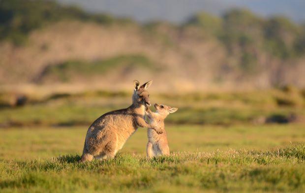 Australia- Australian Wildlife Journeys.1